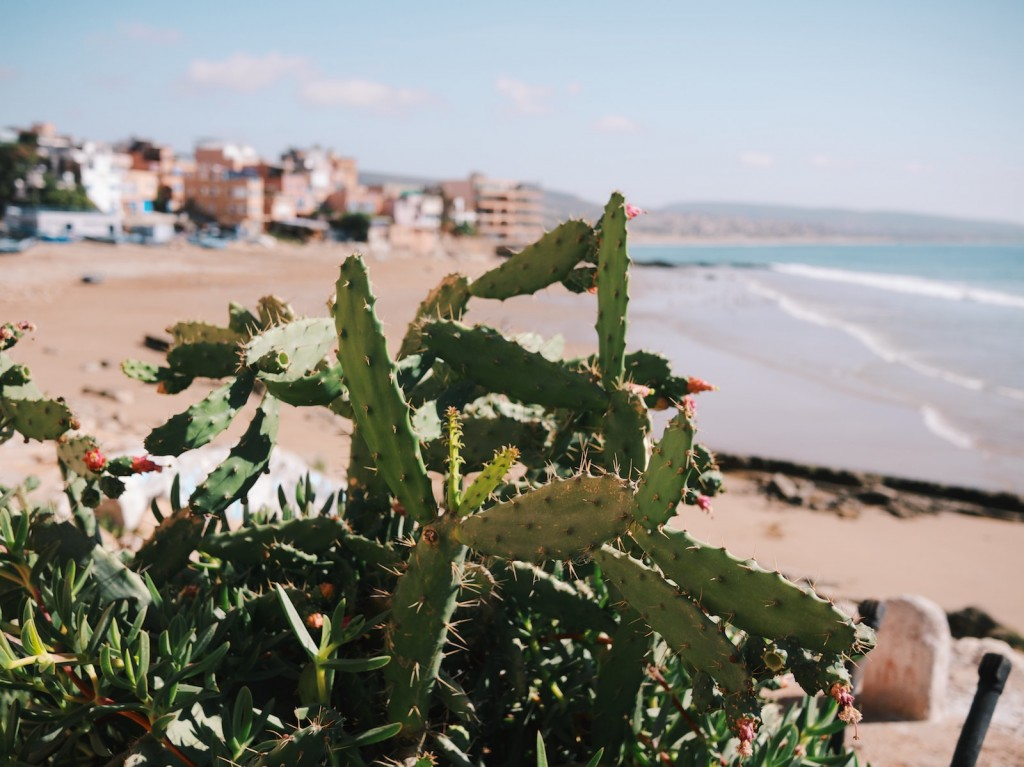 Taghazout cactus