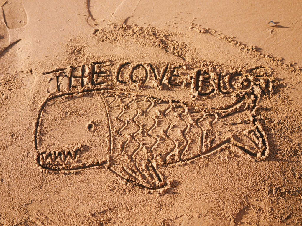 Logo The Cove Blog dans le sable